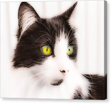 Lovely Little Kitten Canvas Print
