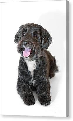 Lovely Long Haired Dog Canvas Print by Natalie Kinnear