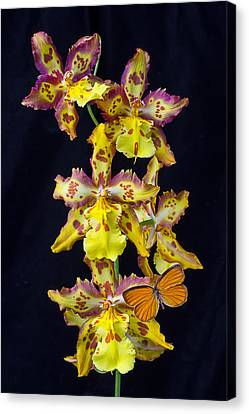 Lovely Orchid With Butterfly Canvas Print by Garry Gay