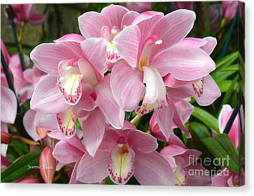 Canvas Print featuring the photograph Cymbidium Pink Orchids by Jeannie Rhode