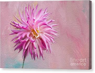 Lovely Pink Dahlia Canvas Print
