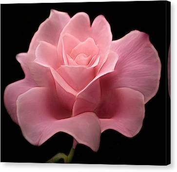 Canvas Print featuring the digital art Lovely Pink Rose by Nina Bradica