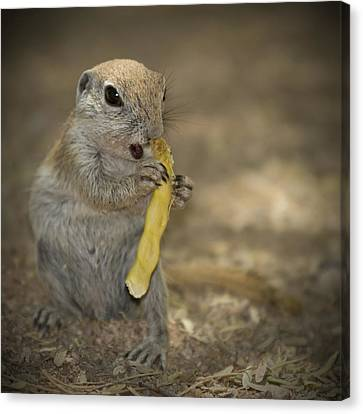 Lovely Prairie Dog Canvas Print