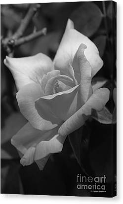 Canvas Print - Lovely Rose by Tannis  Baldwin
