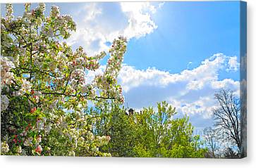 Lovely Spring Blossoms Canvas Print