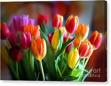 Lovely Tulips Canvas Print by Lutz Baar