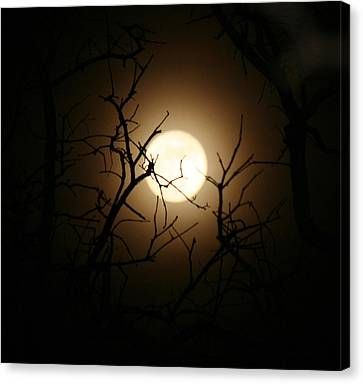 Lovers' Moon Canvas Print