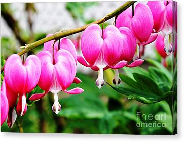 Loving Hearts Canvas Print by Judy Palkimas