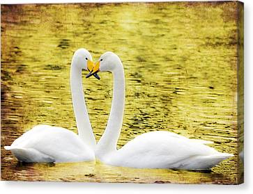 Loving Swans Canvas Print by Tommytechno Sweden