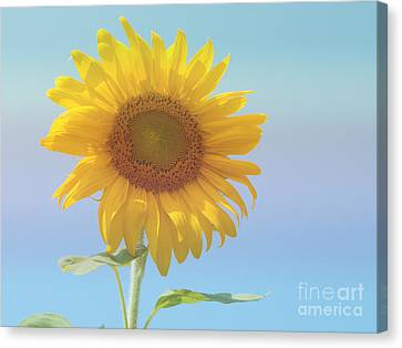 Loving The Sun Canvas Print by Ann Horn