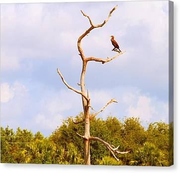 Low Angle View Of A Cormorant Canvas Print by Panoramic Images
