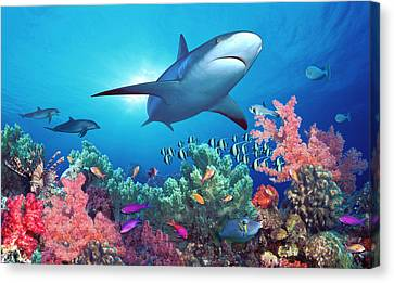 Low Angle View Of A Shark Swimming Canvas Print by Panoramic Images
