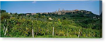Low Angle View Of A Vineyard, San Canvas Print by Panoramic Images