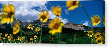 Low Angle View Of Mountains, Montana Canvas Print by Panoramic Images