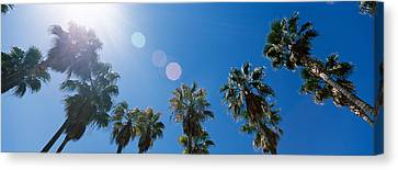 Low Angle View Of Palm Trees, Downtown Canvas Print by Panoramic Images
