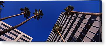 Low Angle View Of Palm Trees In Front Canvas Print by Panoramic Images