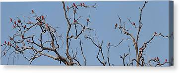 Low Angle View Of Southern Carmine Canvas Print by Panoramic Images