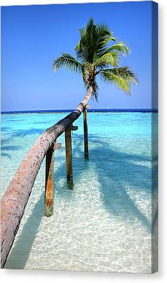 Zen Artwork Canvas Print - Low Bow. Tropical Palm Over Lagoon by Jenny Rainbow