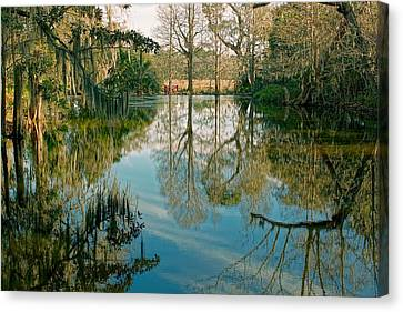Low Country Swamp Canvas Print