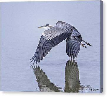 Low Flying Heron Canvas Print