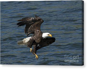 Low Over The Water Canvas Print by Mike  Dawson