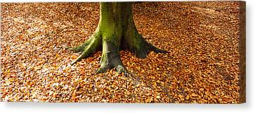 Low Section View Of A Tree Trunk Canvas Print by Panoramic Images