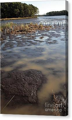 Low Tide At Blackwater Wildlife Refuge In Maryland Canvas Print by William Kuta