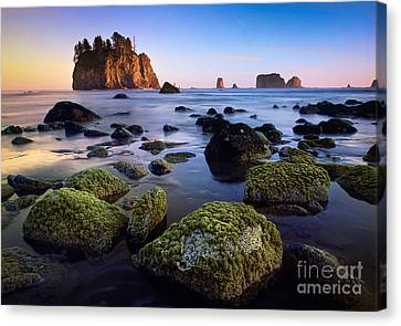 Low Tide At Second Beach Canvas Print by Inge Johnsson