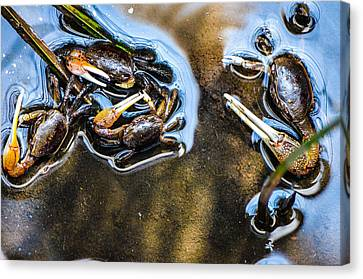 Low Tide Breakfast  Canvas Print