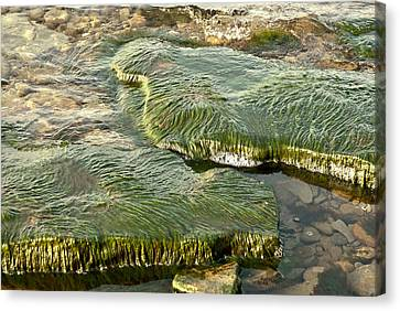 Canvas Print featuring the photograph Low Water Algae by Lena Wilhite