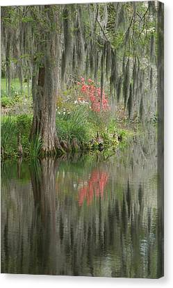 Lowcountry Series I Canvas Print by Suzanne Gaff