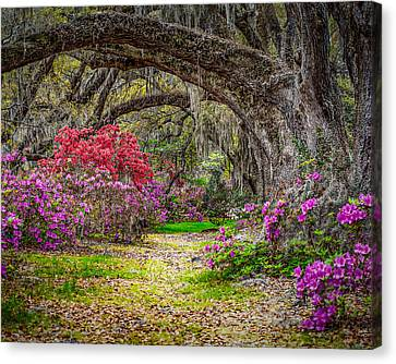Lowcountry Spring Canvas Print by Steve DuPree