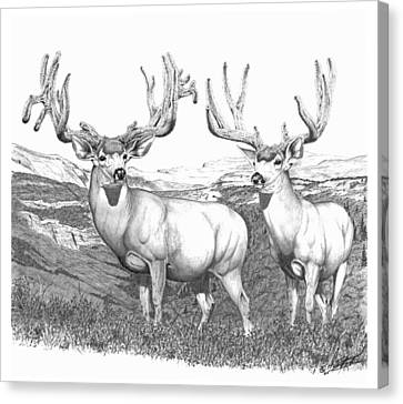 Lowe Buck Canvas Print
