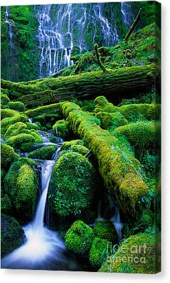Lower Proxy Falls Canvas Print by Inge Johnsson