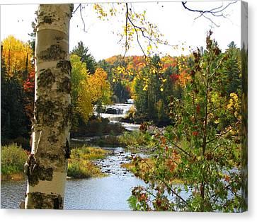 Lower Tahquamenon Falls In October No 1 Canvas Print