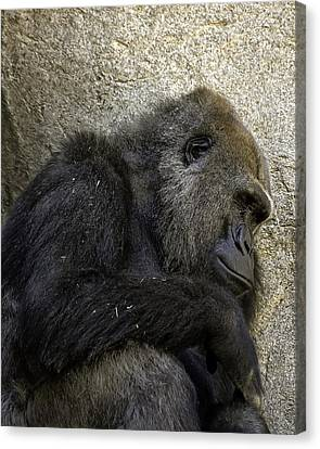 Canvas Print featuring the photograph Lowland Gorilla by Gary Neiss