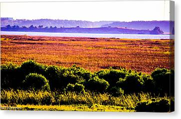 Lowland Light  Canvas Print