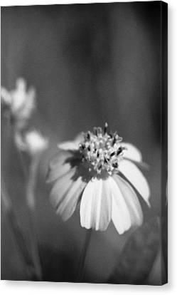 Loxahatchee Flower Canvas Print by Bradley R Youngberg