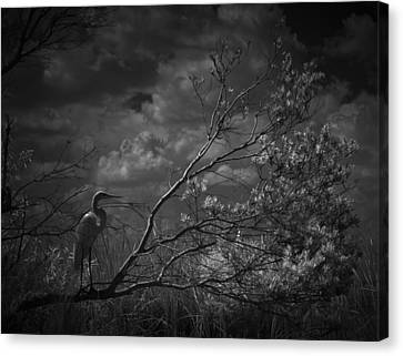 Loxahatchee Heron At Sunset Canvas Print