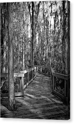 Loxahatchee Refuge-2 Canvas Print by Rudy Umans