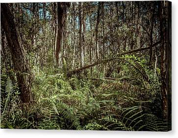 Loxahatchee Refuge-1 Canvas Print by Rudy Umans