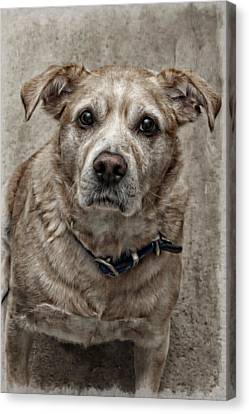 Canvas Print featuring the photograph Loyalty  by Aaron Berg
