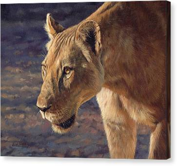Luangwa Princess  Canvas Print by David Stribbling