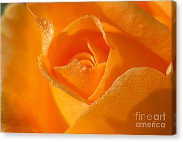 Lucille's Rose Canvas Print