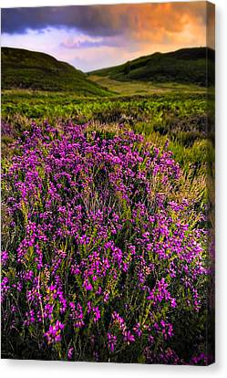 Canvas Print featuring the photograph Lucky Heather by Meirion Matthias