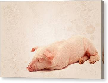 Lucky Pig Canvas Print