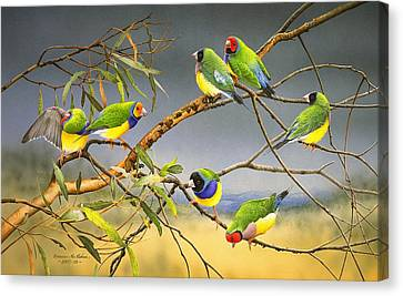 Lucky Seven - Gouldian Finches Canvas Print by Frances McMahon
