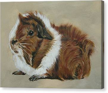 Lucky The Cutest Guinea Pig Canvas Print by Lyndsey Hatchwell