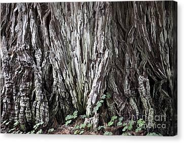 Lucky Tree Canvas Print by Amanda Barcon