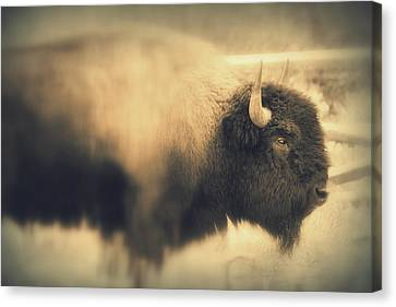 Canvas Print featuring the photograph Lucky Yellowstone Buffalo by Lynn Sprowl